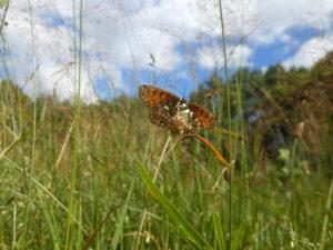Moravskotřebovsko – Motýlí království nad Třebůvkou