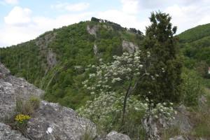 Svatý Jan pod Skalou/Hostim – skalní step Třesina v NPR Karlštejn