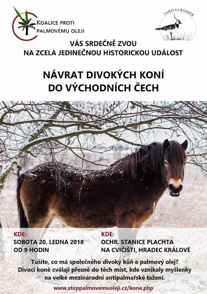 Návrat divokých koní do východních Čech