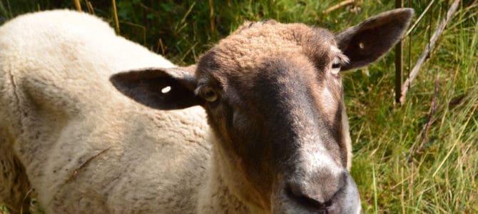 Pražská Pastvina v pořadu Nedej se!