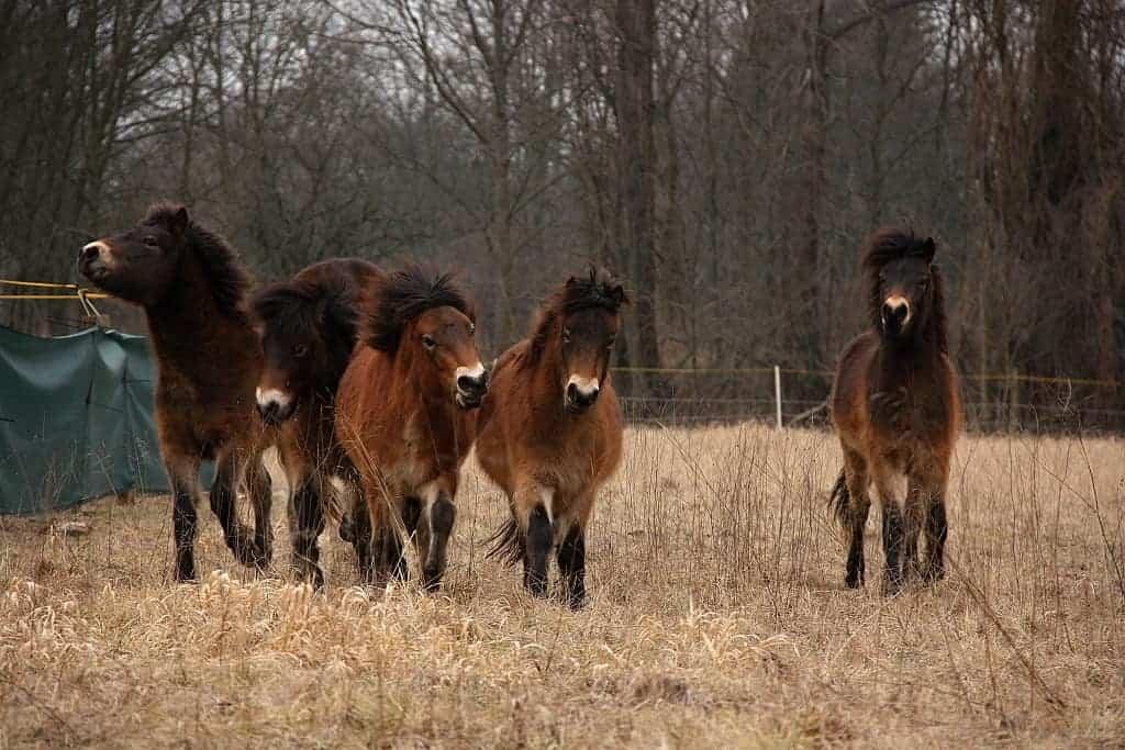 Koně potřebují naši ochranu – prosíme pomozte nám je chránit!