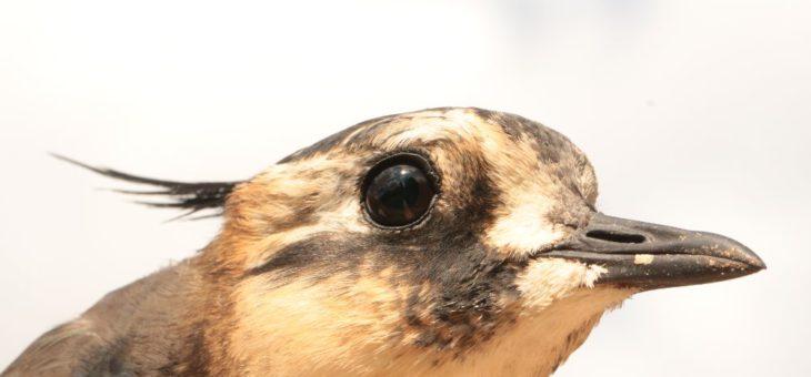 Mrazy minulých dní způsobily migrujícím ptákům problémy