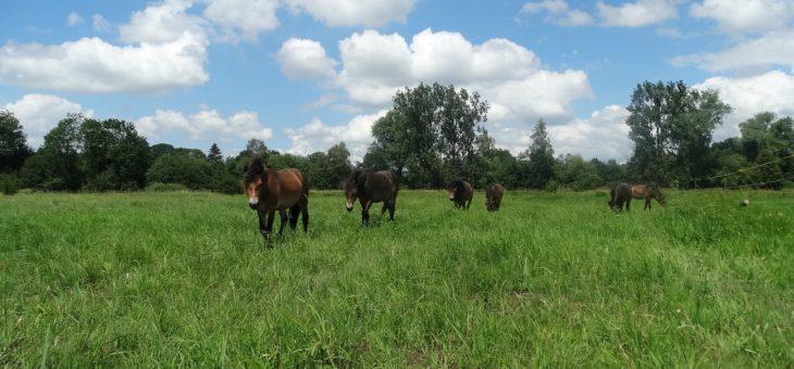 Na Plachtě dokončujeme hlavní pastvinu